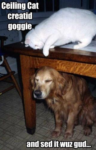 good dog golden retriever Cats - 8436505344