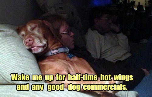 dogs nap super bowl football noms - 8436710144