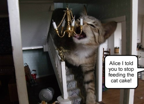 alice in wonderland captions Cats funny