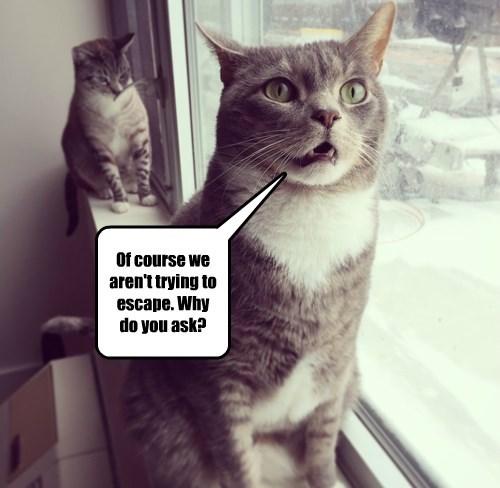 captions Cats funny - 8436758272