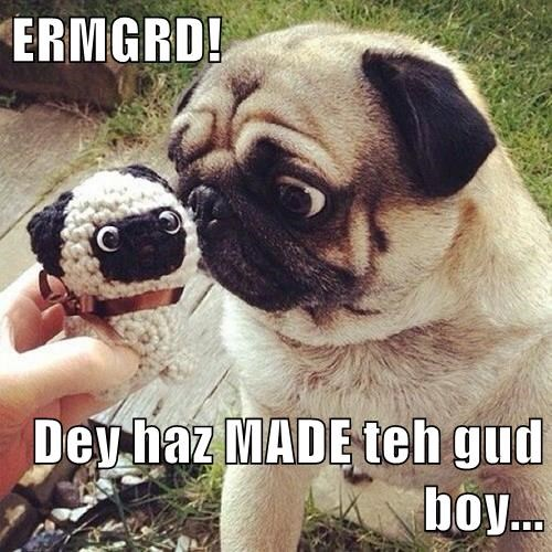 animals dogs pug Ermahgerd good boy