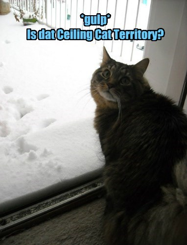 ceiling cat,prophecy,Cats