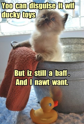 kitten,bath,Cats,siamese,rubber duck
