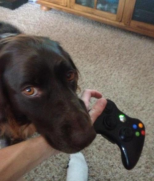 fetch dogs puppy dog eyes - 8436935936