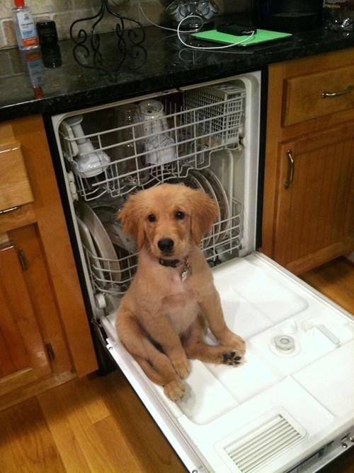 cute dishwasher dogs puppy chorres - 8436960000
