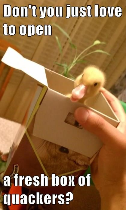 Don't you just love to open  a fresh box of quackers?