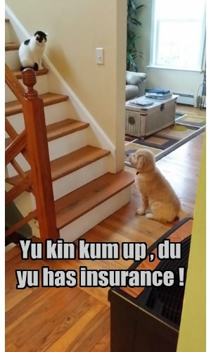 Yu kin kum up , du yu has insurance !