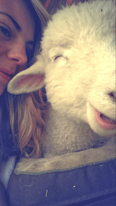 cute lamb smile wool