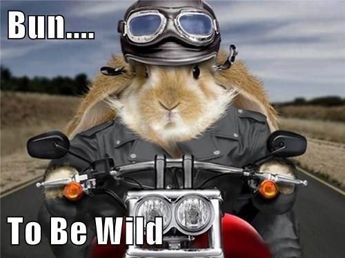 animals Badass puns biker bunny - 8437078272