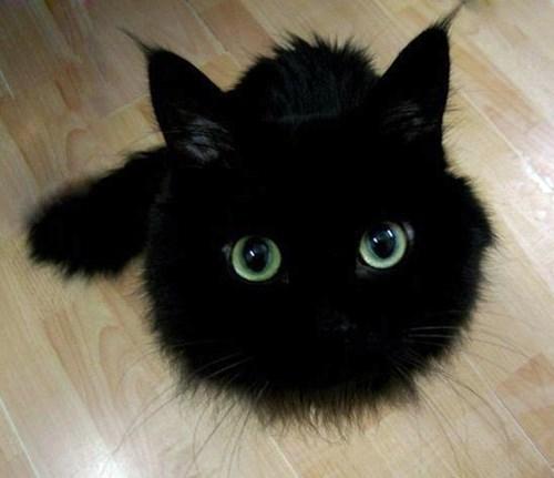 kitten cute Cats - 8437078528