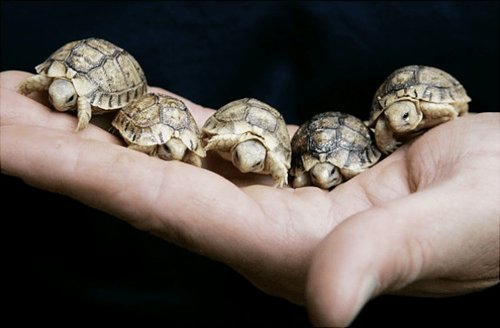 turtles,cute,tortoise