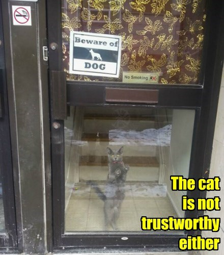 The cat is not trustworthy either