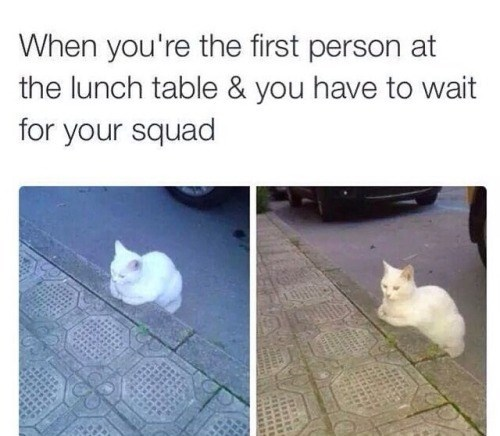 school,lunch,Cats