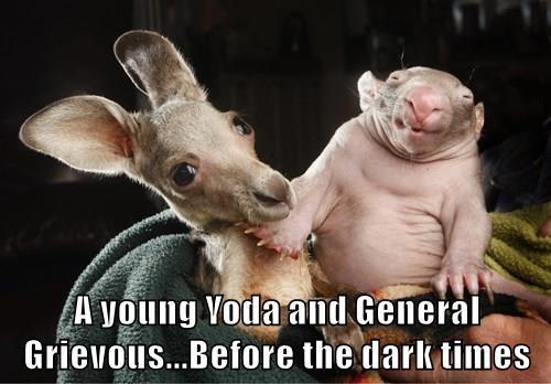 animals baby animals star wars kangaroo yoda - 8437313280