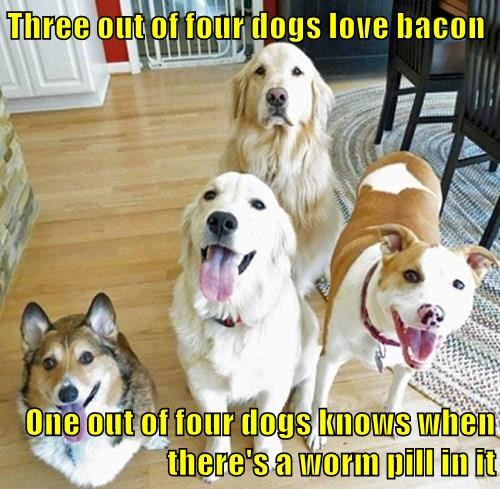 Three out of four dogs love bacon One out of four dogs knows when there's a worm pill in it