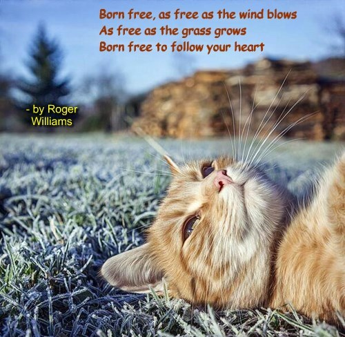 """""""Born Free"""" by Roger Williams"""