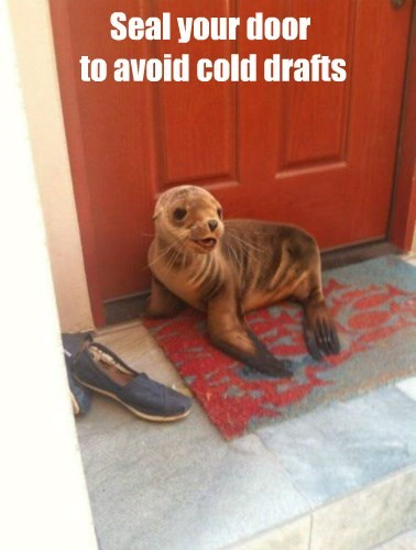seal puns winter - 8437682176