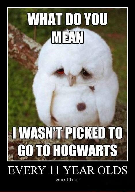 Sad depressing Harry Potter funny Hogwarts - 8437860096