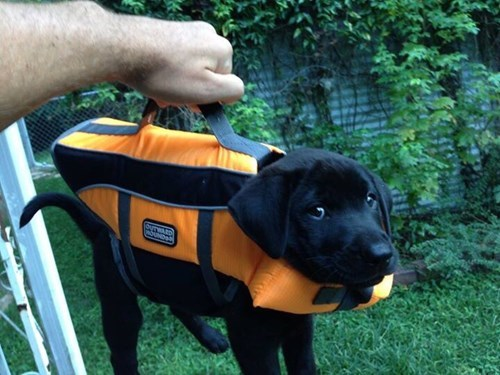 dogs puppy puns Black Lab briefcase - 8438042368