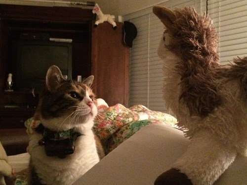 llama,stuffed animal,friends,what are you,Cats