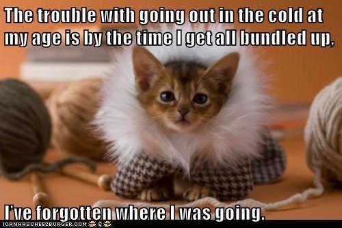 animals cat bundled up caption forgot going - 8438082304