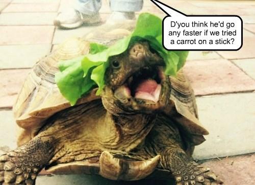 faster,tortoise,noms