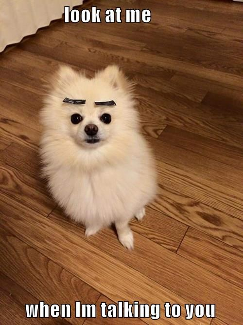 animals dogs eyebrows angry - 8438108160