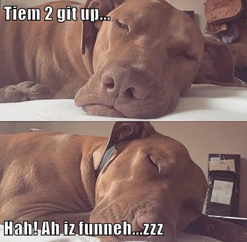 animals saturday sleep weekend - 8438185728