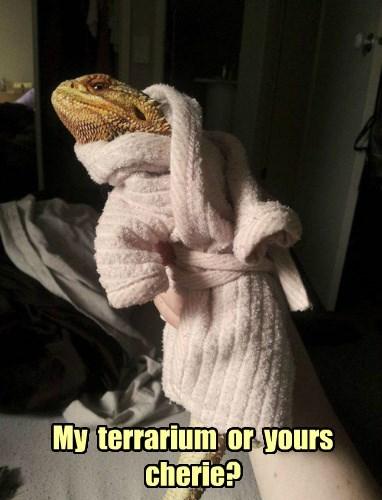 robe,reptile,lizard,sexy