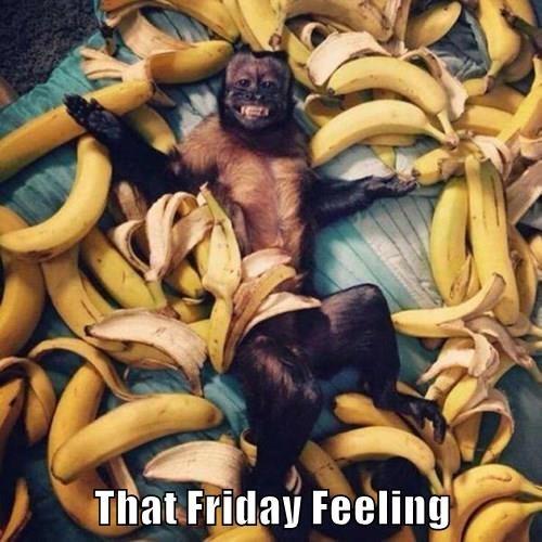 animals FRIDAY aww yeah banana monkey - 8438341120