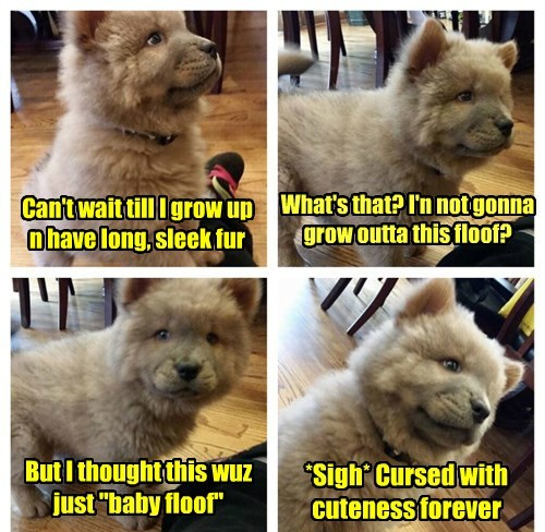 floof dogs puppy curse - 8438404608
