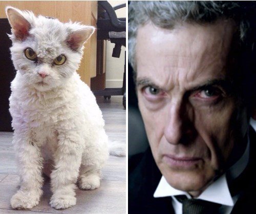 Peter Capaldi totally looks like Cats - 8438505472