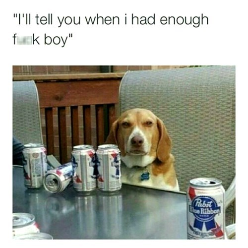 beer dogs pbr - 8438603008