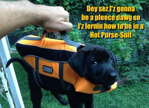 police dog puppy puns Black Lab - 8438754048