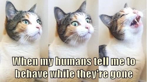 animals gone cat behave captions - 8438992128