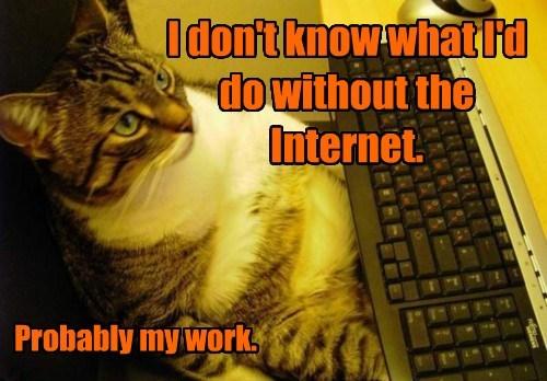 captions Cats funny - 8439371776