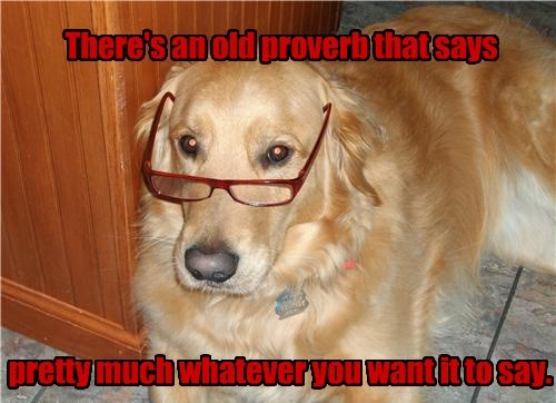 dogs wisdom proverb golden retriever