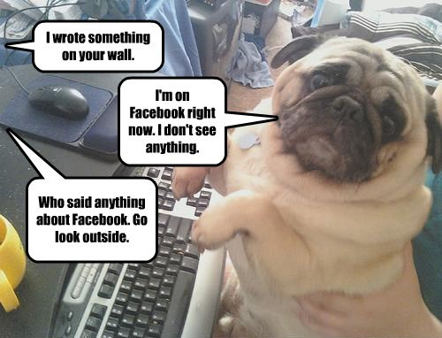 dogs,facebook,caption,wall