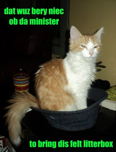 litterbox,cat,felt,minister,caption