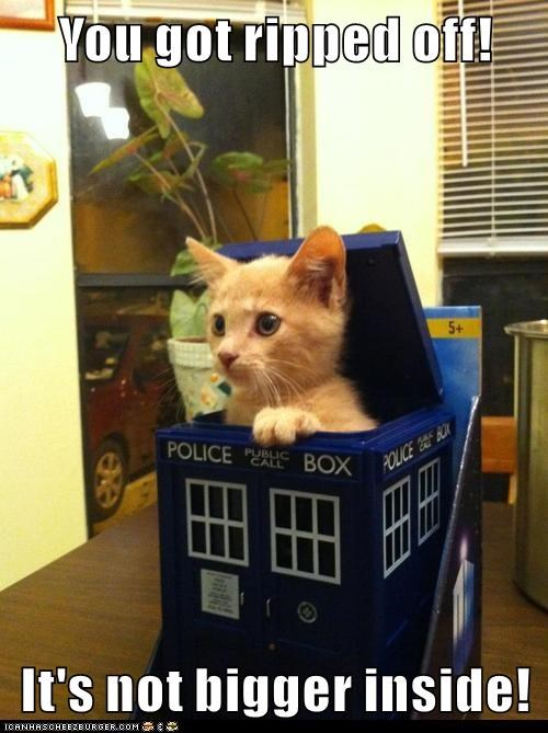 animals tabby if i fits i sits doctor who Cats - 8439511552