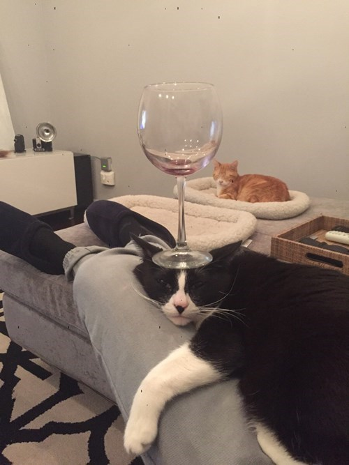 cat with a wine glass on its head