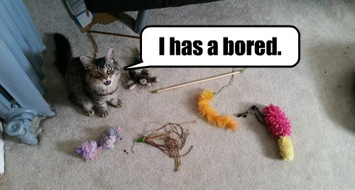 toys bored spoiled Cats