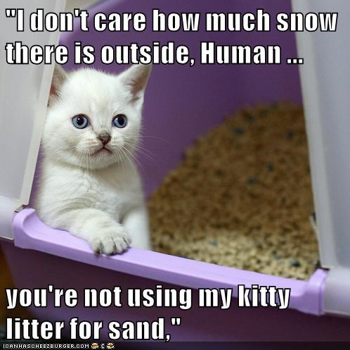 """I don't care how much snow there is outside, Human ... you're not using my kitty litter for sand,"""