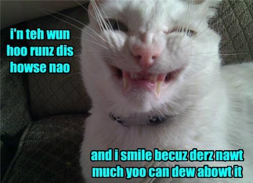 cat house runs caption smile - 8440018944