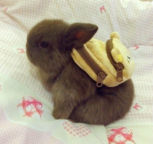 cute baby animals adorable bunny and backpack