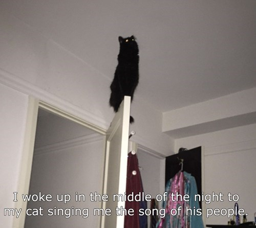 singing meow the song of my people Cats - 8440071424