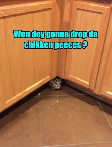 wait,chicken,hidden,noms,Cats