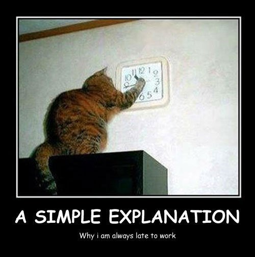 jobs work late Cats funny - 8440230656
