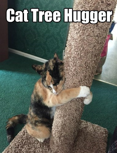 cat hugger tree caption - 8440366080
