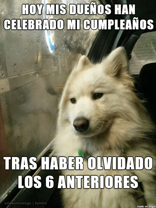 cumpleaños perruno